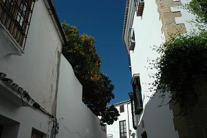 ronda_street1.jpg